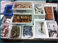 Lowestoft Fish Merchants Continue to Choose STC